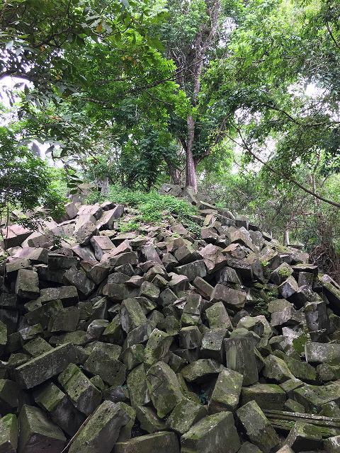 ベンメリア遺跡の飛行石の木