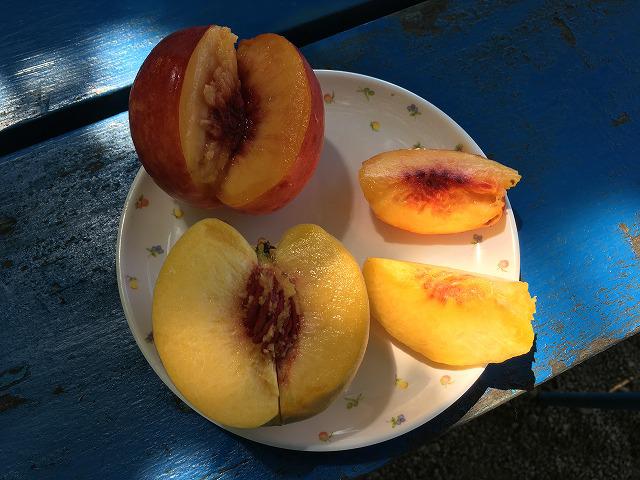 黄桃も食べ放題