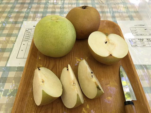 梨狩りで採った梨をその場で食べる